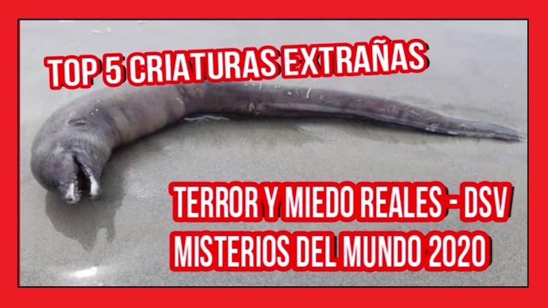 🚫😱 TERROR Y MIEDO REALES DSV parte 91 top 5 criaturas extrañas misterios del mundo 2020