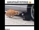 Шикарный перевод!! Разговор котов