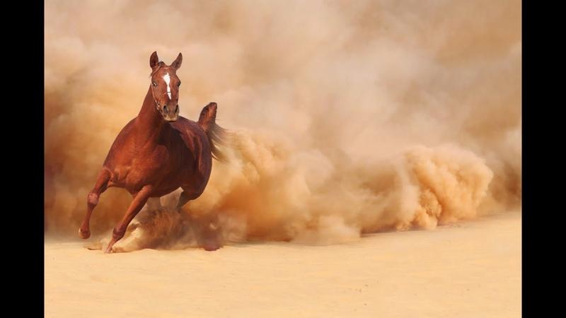 Дикие животные пустыни national geographic