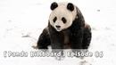 【Panda Billboard】Episode 86 | iPanda