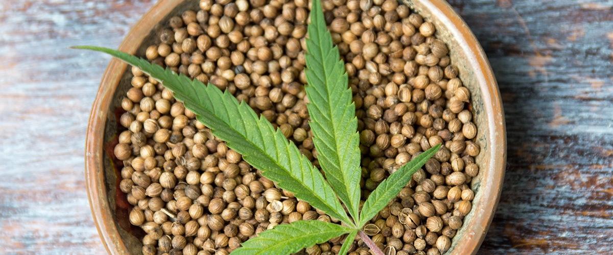 Плохие семена конопли можно ли добавлять в кальян коноплю