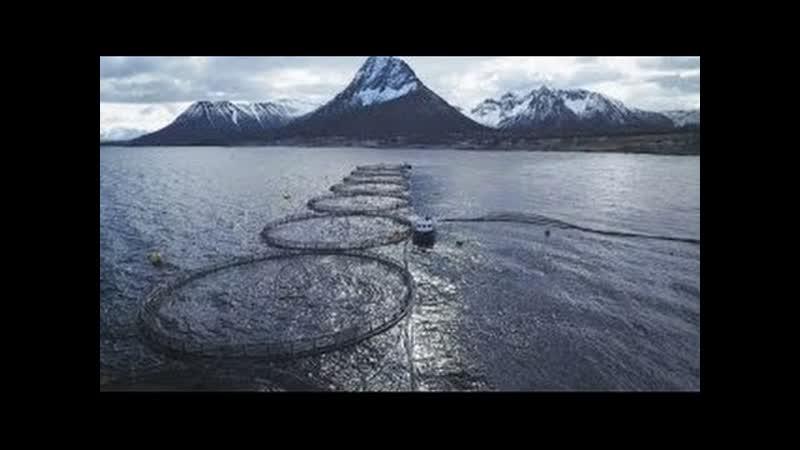 Dokumenation Giftiger Fisch Die große Gesundheitslüge ORF Weltjournal vom 26