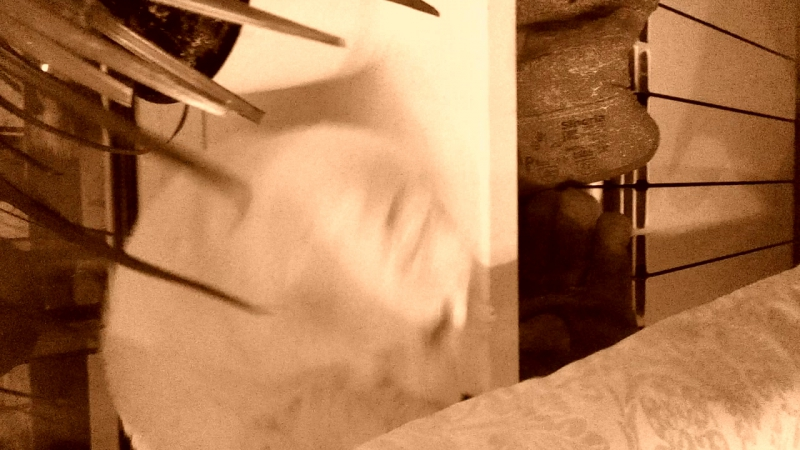 Утро в хату котик в ленту