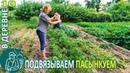 🍅 Подвязка и пасынкование помидор и обзор огорода 🏡 Жизнь Гордеевых в деревне - Влог 10