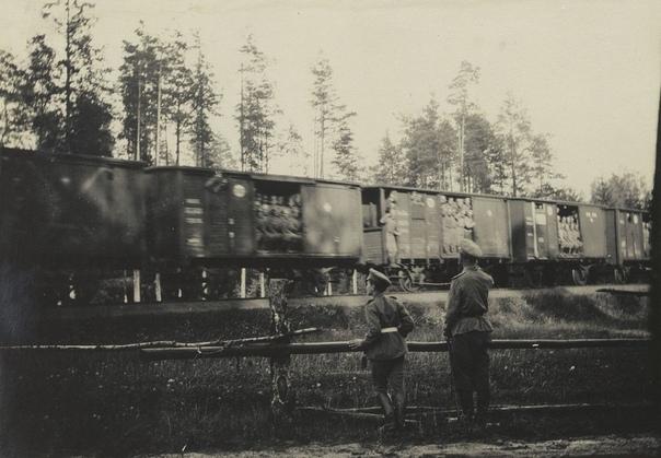 Фирменный поезд адлер москва фото может