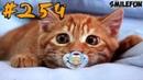 ПРИКОЛЫ 2019 КОТЫ Смешные кошки 2019 Приколы с котами и кошками Funny Cats 2019