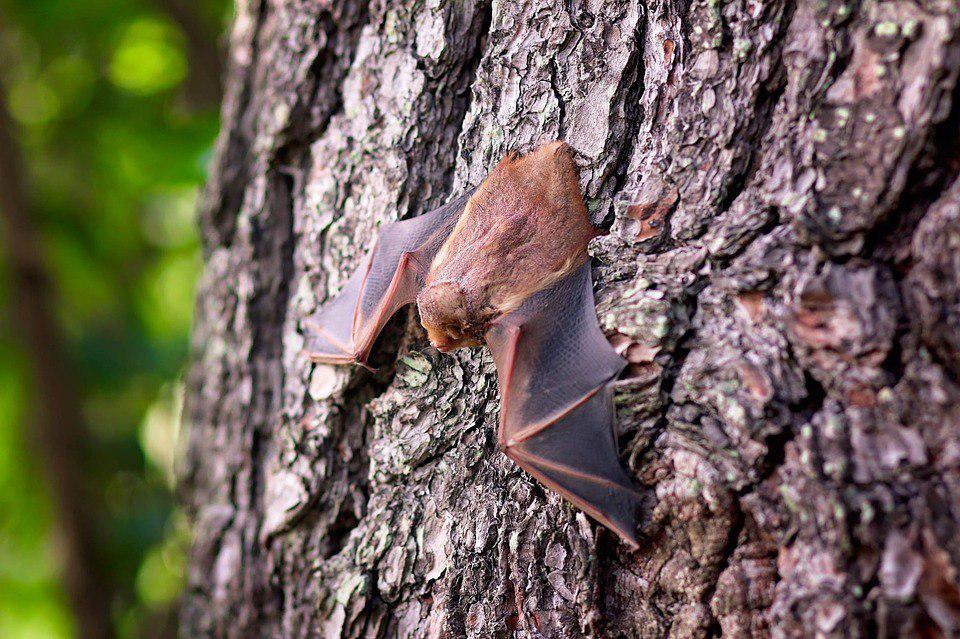 На природных территориях «Кузьминки-Люблино» отметят ночь летучей мыши