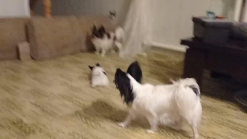Ливи и щенок