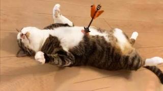 ПРИКОЛЫ С ЖИВОТНЫМИ 😺🐶 Смешные Животные Собаки Смешные Коты Приколы с котами Забавные Животные #3