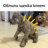 """KOT on Instagram: """"Дети облили Паскаля клеем с лап до головы, из-за чего щенок даже не мог открыть глаза. Но всего через несколько месяцев нашего г..."""