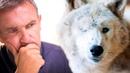 Слепая волчица пришла к дому неизлечимо больного мужчины. Они были созданы друг для друга