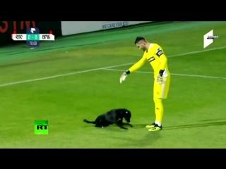 Пёс в игре- в Грузии собака выбежала на поле во время футбольного матча