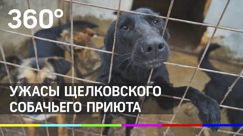 Не все псы попадают в рай. Ужасы Щелковского собачьего приюта