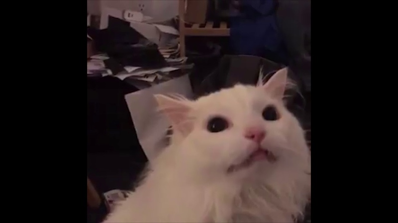 Cat screaming at yoshi's island