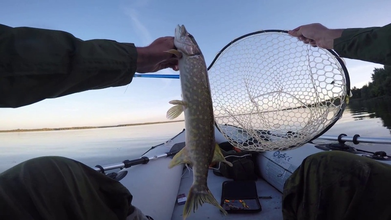 Ultralight pike fishing with barbless hook 14 09 18