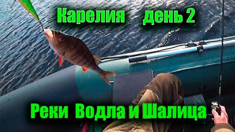 Реки Водла и Шалица Рыбалка в Карелии День второй