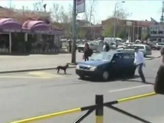 Dog vs. Car! lmfao MUST SEE!!!!