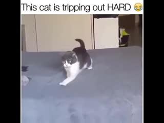 Кот, а молоко точно свежим было!