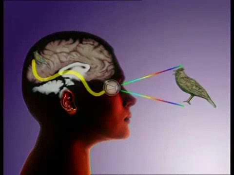 сон разума или восприятие реальности когнитивные нарушения