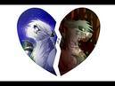 Коты Воители Белогривка и Остролап - Клип Извини, что сердце колитЗаказ