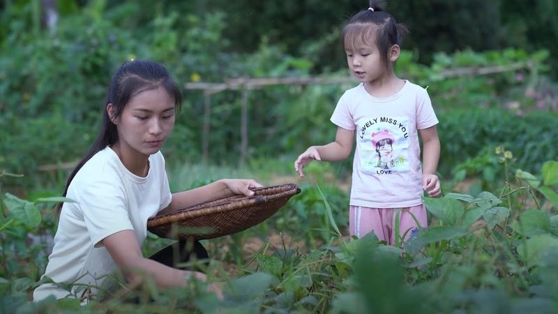 Mung Bean | 花120天把一小袋种子变成绿豆点心 06