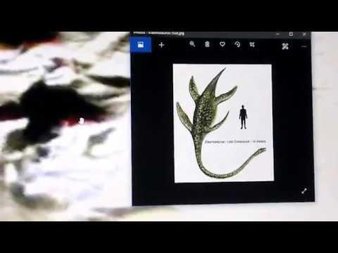ANCIENT ANTARCTIC REPTILE CAUGHT NEAR SETTLEMENT IN MERTZ NINNIS VALLEY