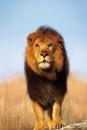 Личный фотоальбом Льва Малькова