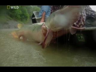 Охотник на пресноводных гигантов Техасский титан