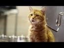 Американская социальная реклама о животных, ищущих хозяев. Говорящие котэ