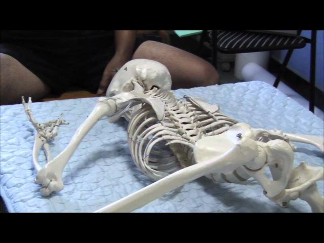 Feldnekrais Rotation of Head Chest bone Spine in supine prone