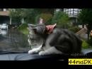 Приколы с котами Лучшая подборка 2018 котаны смешные коты собаки и кошки до слез