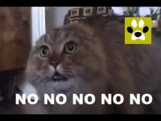 NONONONO Cat. Дай Лапу