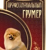 Стрижка собак и кошек   Москва