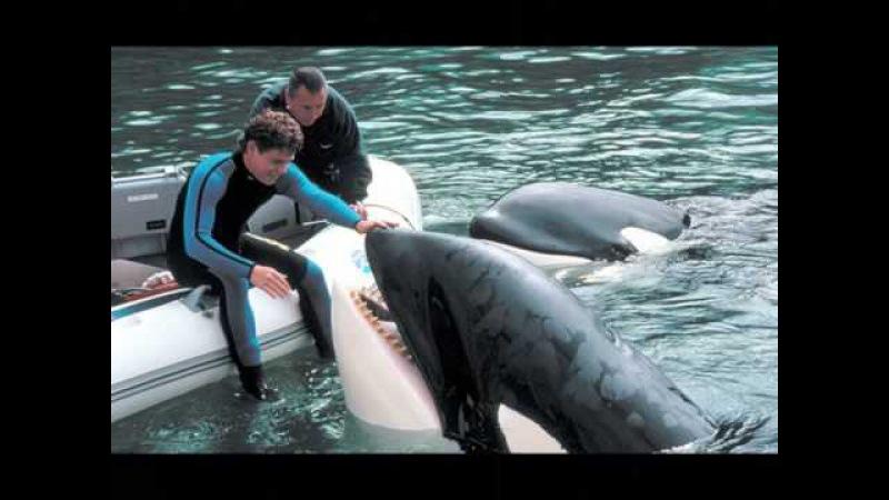 Keiko a wounderful whale..x