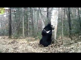 """Медведь-почесун на """"Земле леопарда"""""""