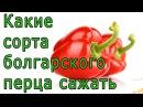 Какие сорта болгарского перца сажать в открытый грунт и в теплице