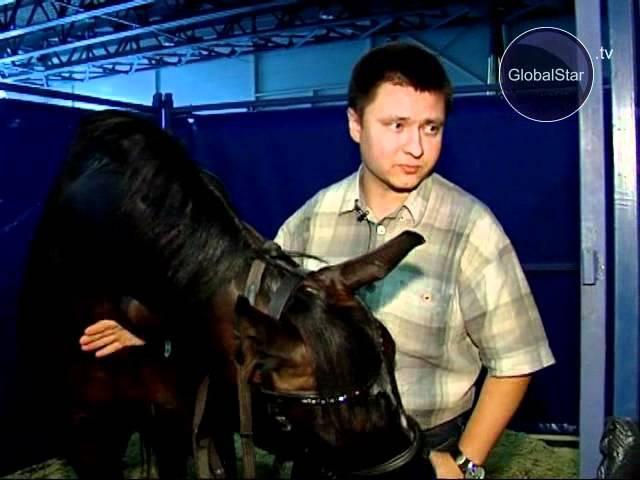GLOBAL STAR TV 02 ВЫБИРАЕМ ЛОШАДЬ