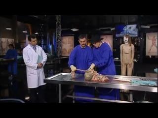 Анатомия пищеварительной системы (anatomy for beginners digestion)