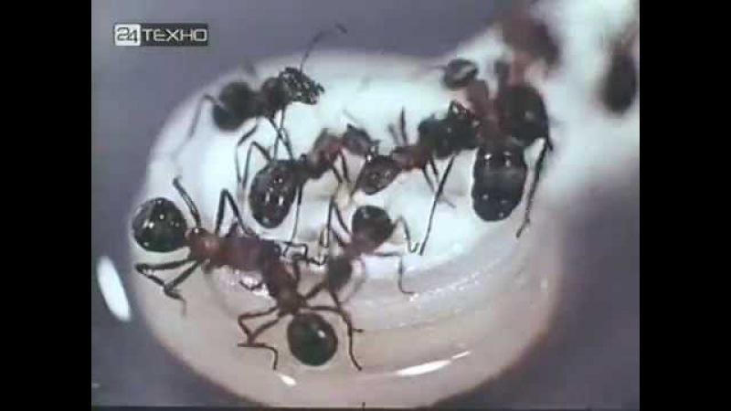 Феликс Соболев: Язык животных, 1967, Научно-популярный фильм