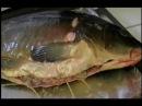 Левенги из рыбы. Азербайджанская кухня