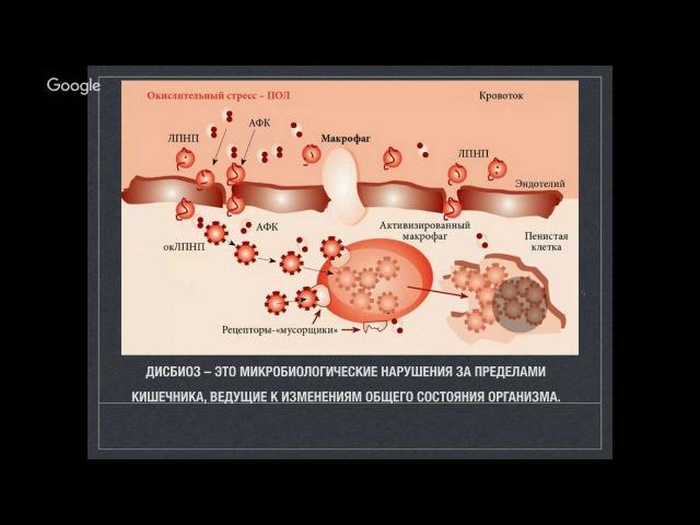 Дисбактериоз Пути оздоровления Вегетарианство и сыроедение Владимир Калмыков