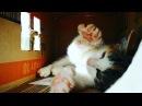 Alaa_mogus video