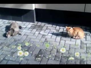 Котики радуются апрельскому теплу