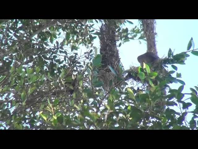 Удивительная амазонка Южная Америка Д Ф 2012
