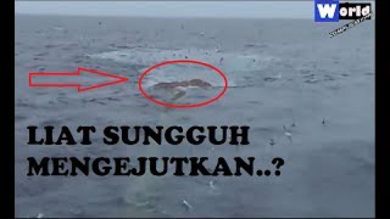 Mulanya dikira tumpukan SAMPAH dibawah laut tak taunya sungguh mengejutkan