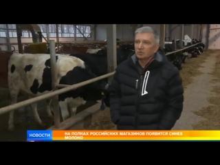 Почему молоко в России станет синим. Сюжет на телеканале Рен ТВ