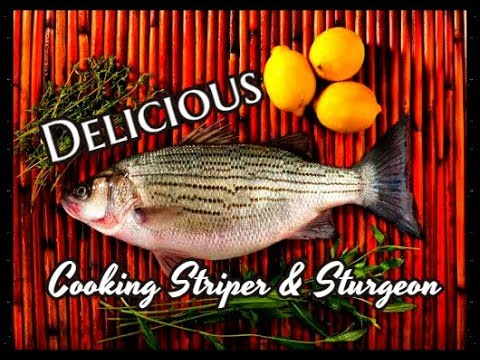 Cooking striper sturgeon and lingcod
