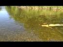 река Волчья
