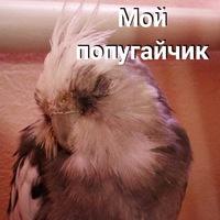 Мой Попугайчик.