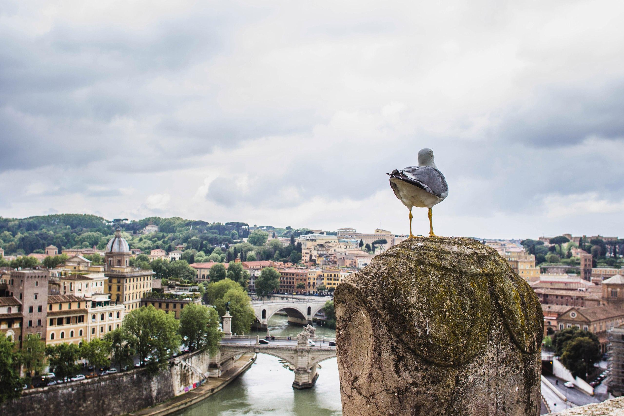 Вездесущие чайки! Вид из замка святого ангела